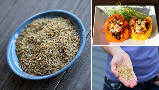Is freekeh gluen-free?